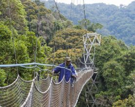 2-Day Chimpanzee Tracking and Canopy Walk in Nyungwe