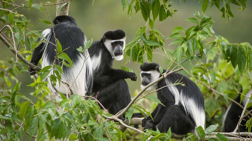 5 Days Rwanda Primates tour